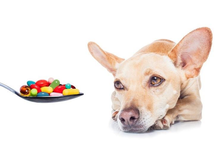 Лечение воспаления сустава у собак гомель где купить фиксатор коленного сустава hks-393 d cfyrn gtnth, ehut